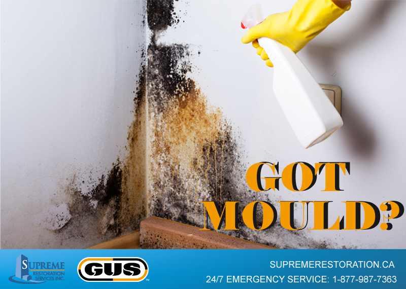 Got Mould? Contact Supreme Services today!