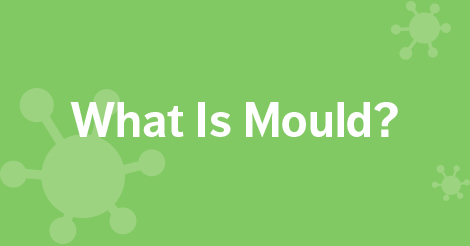 What is Mould?