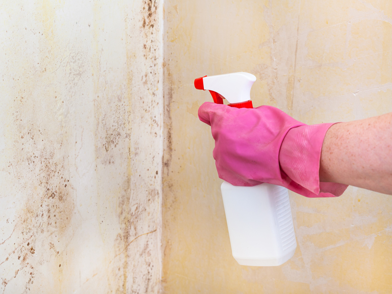 Why You Should Get Help at the Earliest Sign of Mould in Your Home